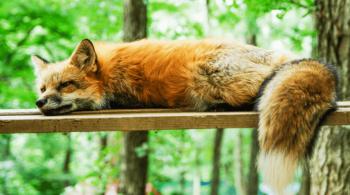 In questa guida voglio spiegarti come dormire bene in poche ore