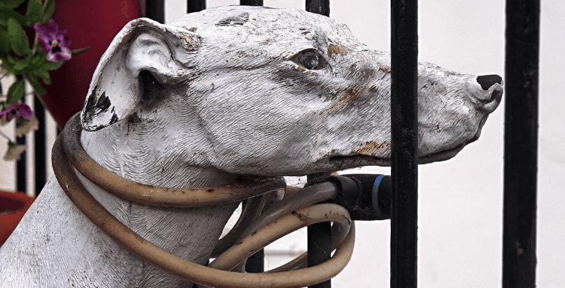 I Prodotti Amway Sono Testati su Animali?