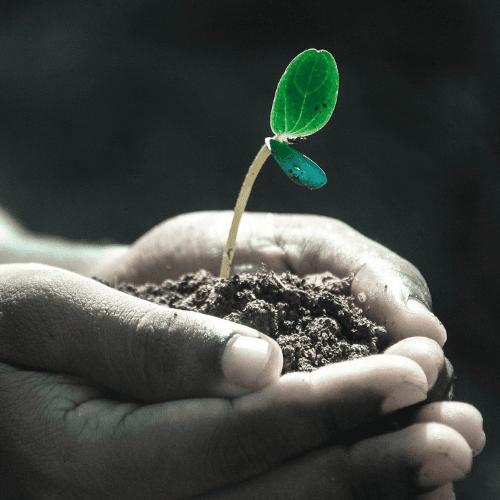 immagine pianta cresce
